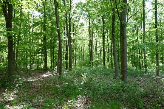 Kom en tur i skoven