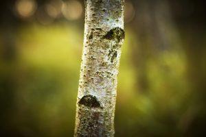 Kommunikation - træ i skov
